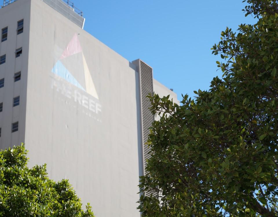 DSC02701 reef building